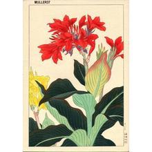Nishimura Hodo: Canna Lily - Japanese Art Open Database