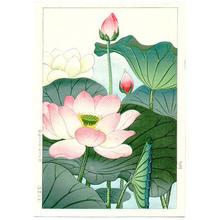 Nishimura Hodo: Lotus - Japanese Art Open Database
