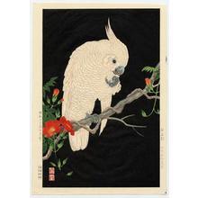 Nishimura Hodo: Omu, Parrot - Japanese Art Open Database