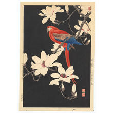Nishimura Hodo: Parrot on a branch of magnolia - Japanese Art Open Database