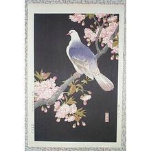Nishimura Hodo: Pigeon - Japanese Art Open Database