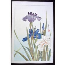 Nishimura Hodo: Unknown, Iris - Japanese Art Open Database