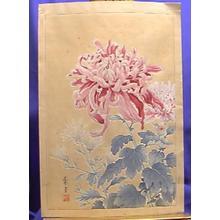 Nishimura Hodo: Unknown Pink Cjrysanthemum - Japanese Art Open Database