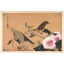 Rakusan Tsuchiya: Bird and flowers - Japanese Art Open Database
