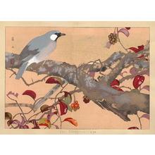 Rakusan Tsuchiya: Bird on Branch - Japanese Art Open Database