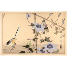 Rakusan Tsuchiya: Bird on ground and flowers - Japanese Art Open Database