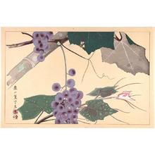 Rakusan Tsuchiya: Grapes - Japanese Art Open Database
