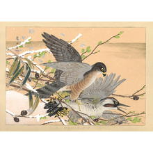 Rakusan Tsuchiya: Hawk attacking - Japanese Art Open Database