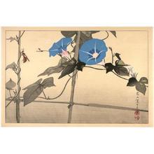 Rakusan Tsuchiya: Insect with flowers - Japanese Art Open Database