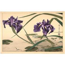 Rakusan Tsuchiya: Iris flowers - Japanese Art Open Database