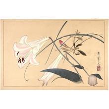 Rakusan Tsuchiya: Orchid flowers - Japanese Art Open Database