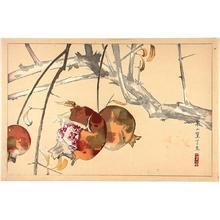 Rakusan Tsuchiya: Pomegranate - Japanese Art Open Database
