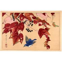 Rakusan Tsuchiya: Blue Bird and Wild Grape Vine - Japanese Art Open Database