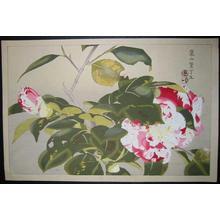 Rakusan Tsuchiya: Camellias - Japanese Art Open Database