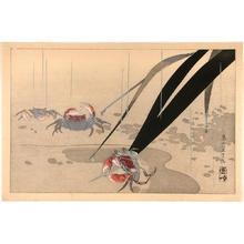 Rakusan Tsuchiya: Crabs in shallow water - Japanese Art Open Database
