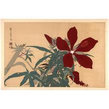 Rakusan Tsuchiya: Flowers - Japanese Art Open Database