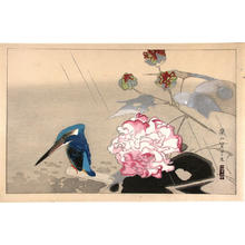 Rakusan Tsuchiya: Kingfisher in the rain - Japanese Art Open Database