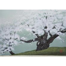 Sano Seiji: Lying Dragon Sakura — 臥龍桜 - Japanese Art Open Database