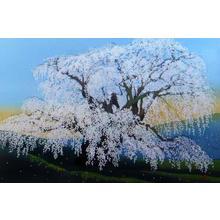 Sano Seiji: Three Spring Months- Waterfall Sakura — 三春瀧櫻 - Japanese Art Open Database