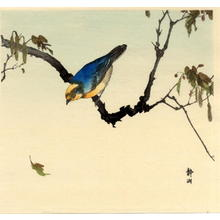 静湖: Finch on Plane Tree - Japanese Art Open Database