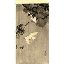 Shoson Ohara: Birds of Paradise - Japanese Art Open Database
