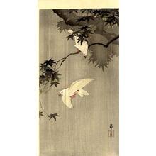 Shoson Ohara: Birds of Paradise - Japanese Art Open Database