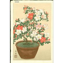 Shoson Ohara: Bonsai azelia - Japanese Art Open Database