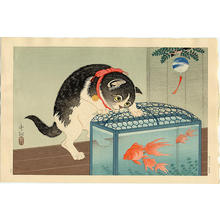 Shoson Ohara: Cat and Bowl of Goldfish - Japanese Art Open Database