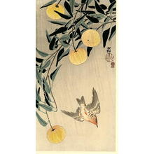 Shoson Ohara: Cuckoo - Japanese Art Open Database