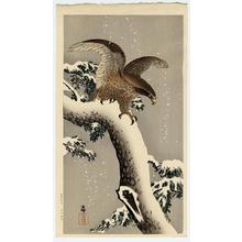 Shoson Ohara: Eagle on snowy tree bough - Japanese Art Open Database