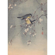 Shoson Ohara: Finches in Cherry Tree - Japanese Art Open Database