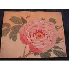 Shoson Ohara: Flower and Bee - Japanese Art Open Database