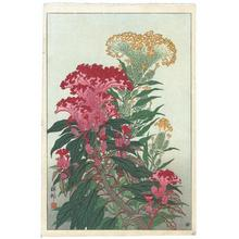 Shoson Ohara: Flowering Coxcomb - Japanese Art Open Database