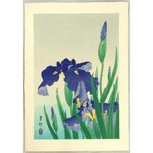 Shoson Ohara: Flowering Iris - Japanese Art Open Database