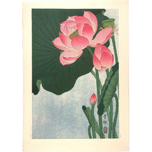 Shoson Ohara: Flowering Lotus - Japanese Art Open Database