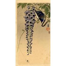 Shoson Ohara: Flycatcher and Wisteria - Japanese Art Open Database