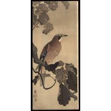 Shoson Ohara: Jay on an oak branch - Japanese Art Open Database