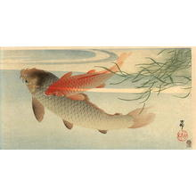 Shoson Ohara: Koi Carp - Japanese Art Open Database