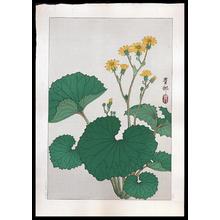 Shoson Ohara: Ligularia - Japanese Art Open Database