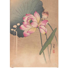 Shoson Ohara: Lotus Flower and Finch - Japanese Art Open Database