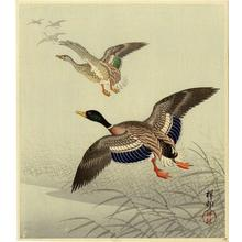 Shoson Ohara: Mallards in Flight - Japanese Art Open Database