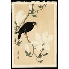 Shoson Ohara: Myna bird- Indian Hill Minor and Magnolia - Japanese Art Open Database