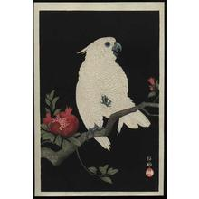 Shoson Ohara: Parrot and Pomegranate- Cockatoo - Japanese Art Open Database