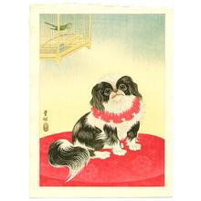 Shoson Ohara: Pekingese Dog and Bush Warbler - Japanese Art Open Database