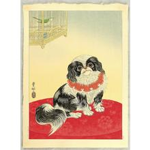 Shoson Ohara: Pekingese Dog and Bush Warbler - Japanese Art Open Database