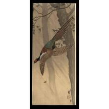 Shoson Ohara: Pheasant in flight between trees - Japanese Art Open Database