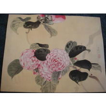 Shoson Ohara: Pink Flowers - Japanese Art Open Database
