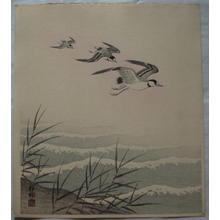 Shoson Ohara: Plover Family — ちどりの親子 - Japanese Art Open Database