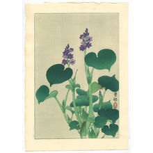 Shoson Ohara: Purple Flowering Hosta - Japanese Art Open Database