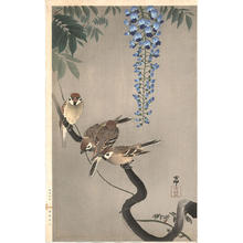 Shoson Ohara: Sparrows on wisteria - Japanese Art Open Database